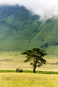 gal/Wildlife/thumbs/_thb_Elephant_in_ngorongoro.jpg